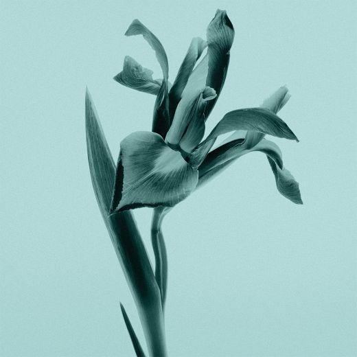 Tiffany Eau de Parfum Intense (EDP)